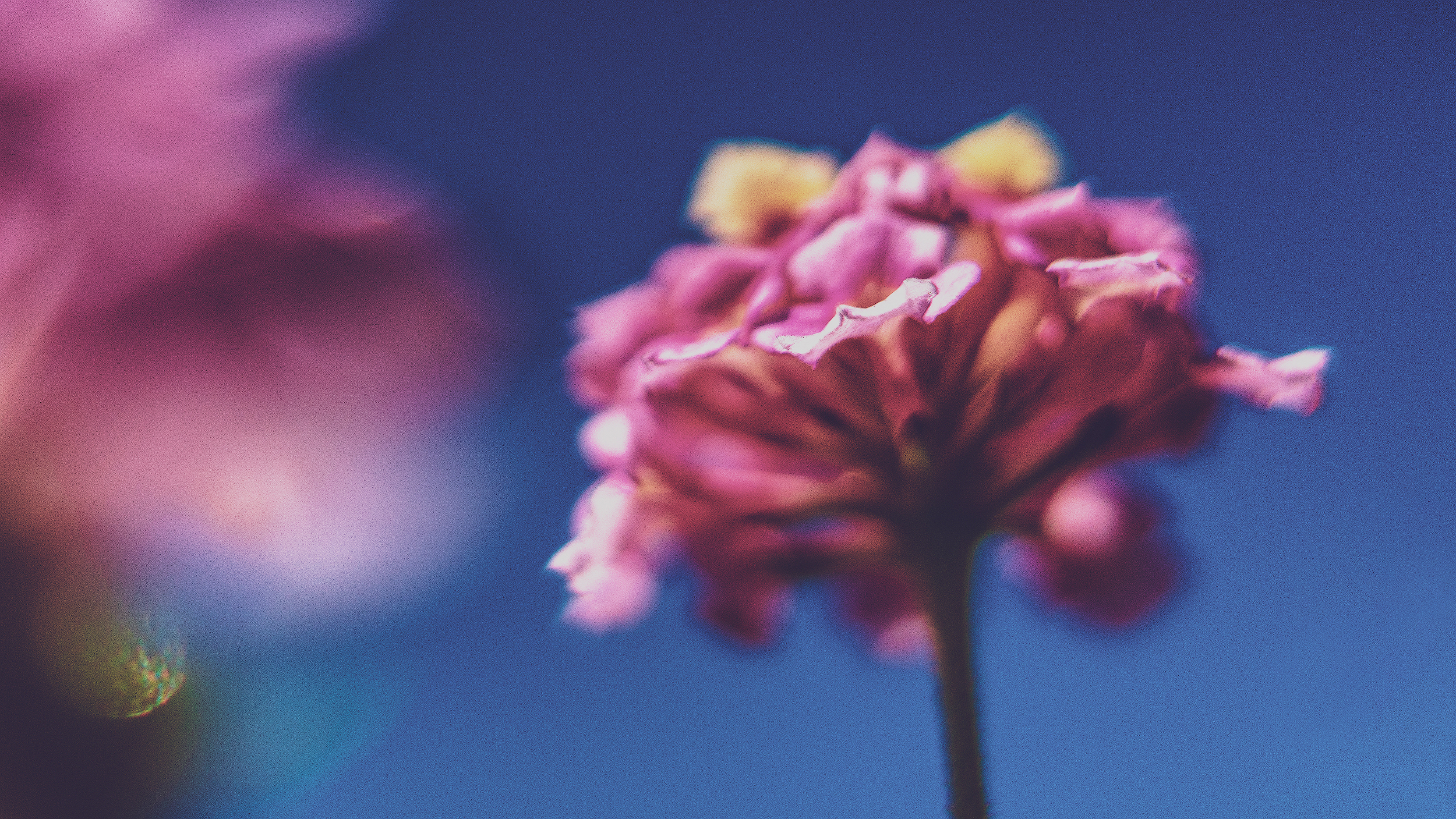 looking up at a flower - i get smaller